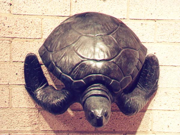 Small Wall Turtle
